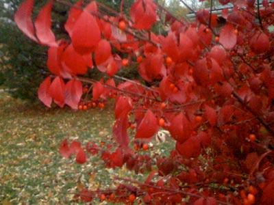 fall-color.jpg