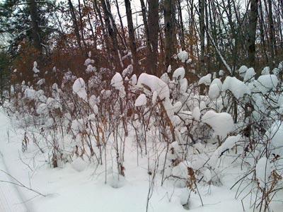 snowgrass.jpg