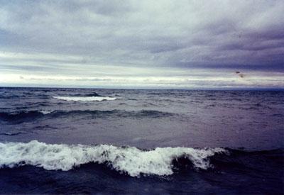 winterwaves