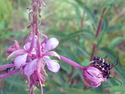 pinkflowerbees