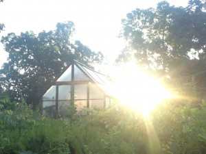 sunrisegreenhouse