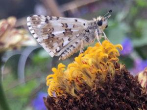 mothie